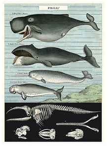 Cavallini Whales Wrapping Paper Poster