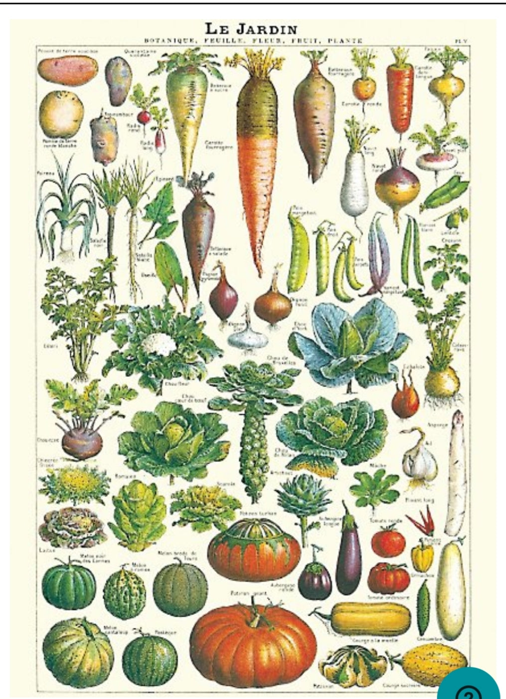 Cavallini Vegetables Wrapping Paper Poster