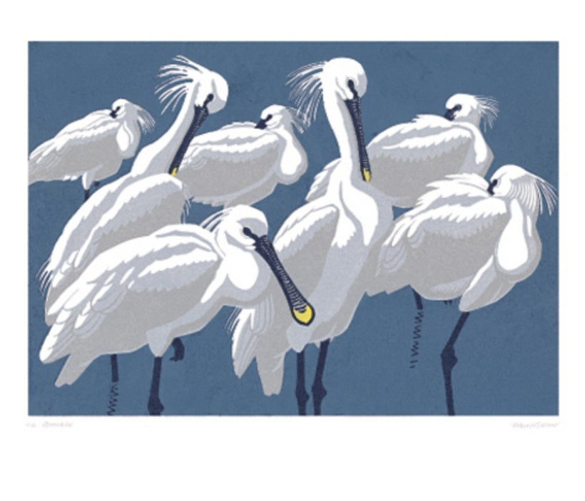 Card - Spoonbills by Richard Gillmor
