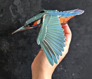 Birdmobile Kit (Kingfisher)