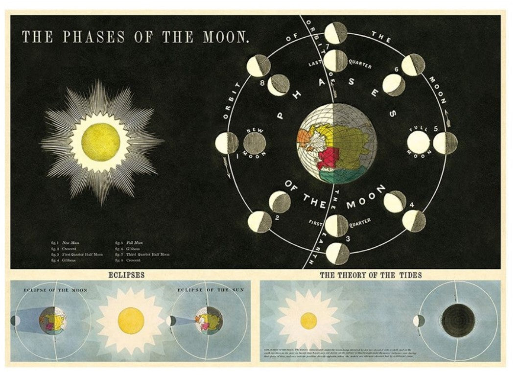 Cavallini Phases of the Moon Wrapping Paper Poster