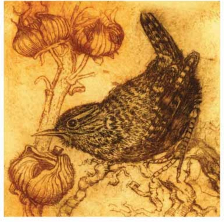 Card - Wren & the Seed Heads by Anna Ravenscroft