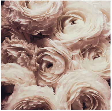 Cream Flower Art, Home Accessories, Laura of Pembroke