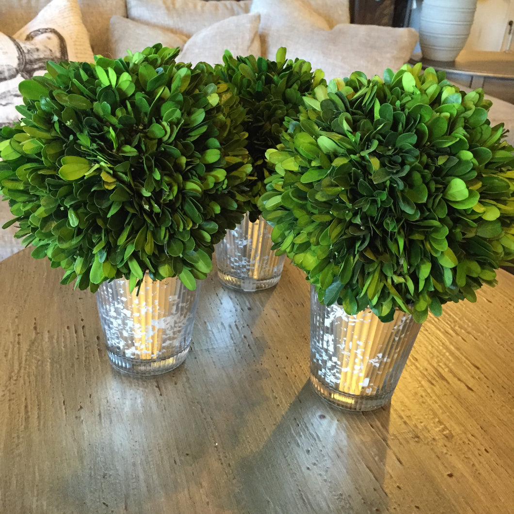 Green Boxwood in Mercury Glass Vase, Home Accessories, Laura of Pembroke