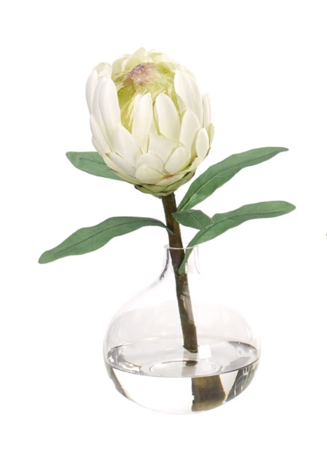 Protea in Glass