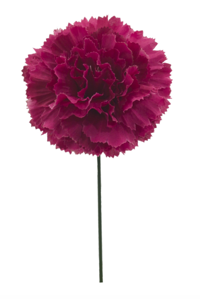 Carnation Cerise Stem, Home Accessories, Laura of Pembroke