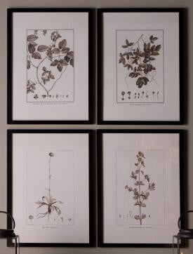 Framed Sepia Botanical Prints, Home Accessories, Laura of Pembroke