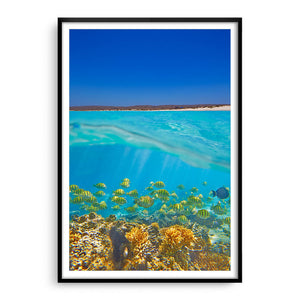 Fish swimming underwater on the Ningaloo Reef in Western Australia framed in black