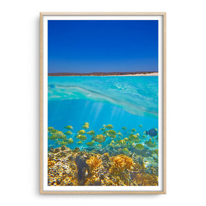 Fish swimming underwater on the Ningaloo Reef in Western Australia framed in raw oak