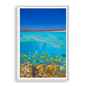Fish swimming underwater on the Ningaloo Reef in Western Australia framed in white