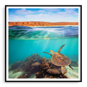 Turtle swimming underwater at Ningaloo Reef, Western Australia framed in black