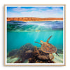 Turtle swimming underwater at Ningaloo Reef, Western Australia framed in raw oak
