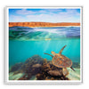 Turtle swimming underwater at Ningaloo Reef, Western Australia framed in white