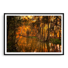 Beautiful golden light and reflections at Lake Monger, Perth in Western Australia framed in black