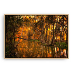 Beautiful golden light and reflections at Lake Monger, Perth in Western Australia framed canvas in raw oak