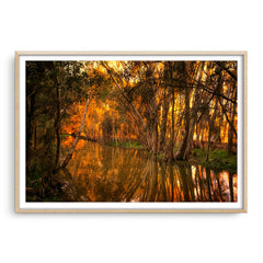 Beautiful golden light and reflections at Lake Monger, Perth in Western Australia framed in raw oak