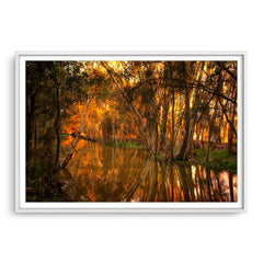 Beautiful golden light and reflections at Lake Monger, Perth in Western Australia framed in white