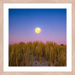 Moon rising over the sand dunes of Mullaloo Beach on New Years Eve in Perth, Western Australia framed in raw oak
