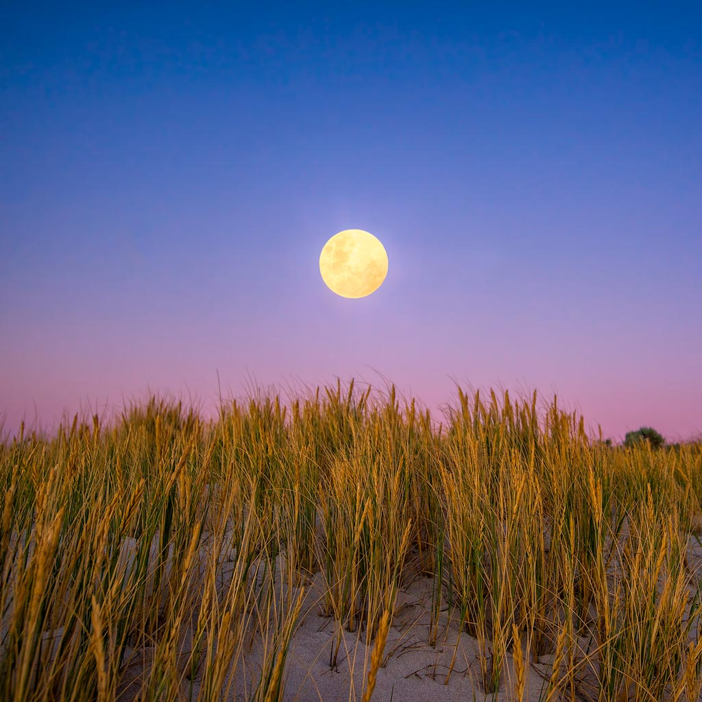 Moon rising over the sand dunes of Mullaloo Beach on New Years Eve in Perth, Western Australia