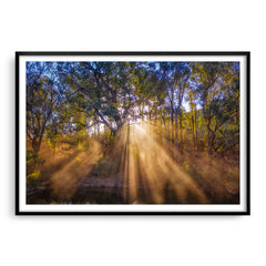 Rays of sun through forest in Western Australia framed in black