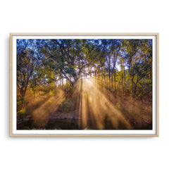 Rays of sun through forest in Western Australia framed in raw oak