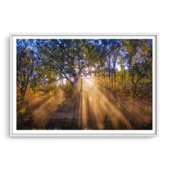 Rays of sun through forest in Western Australia framed in white