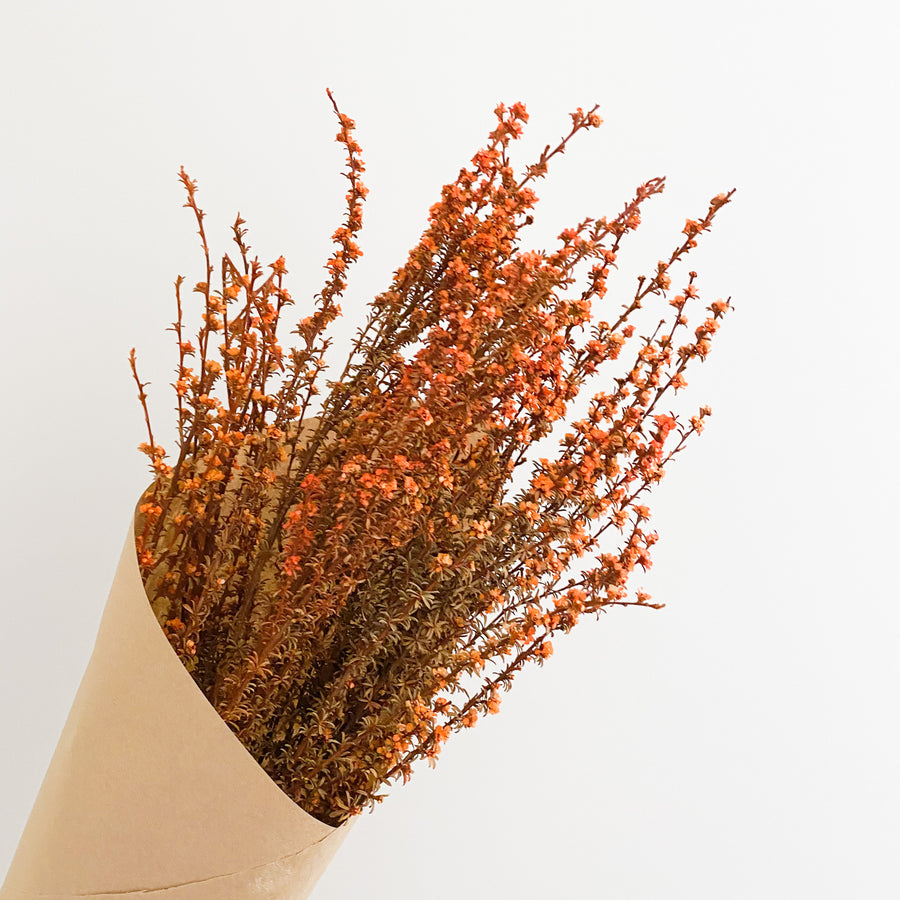 Dried Tea Tree Bunch - Orange