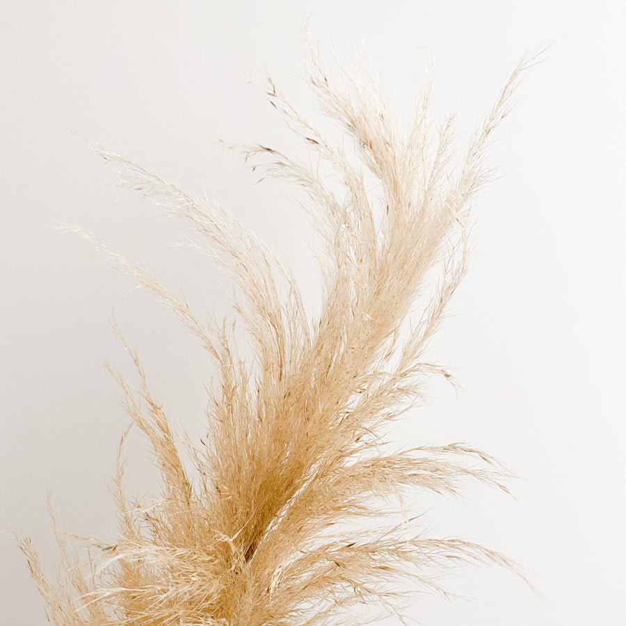 Pampas Grass Stem - Natural