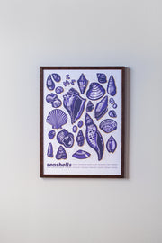Seashells Print in Dark Frame by Brainstorm