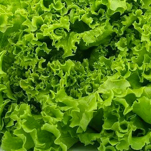 Lettuce Green Ice - 500g