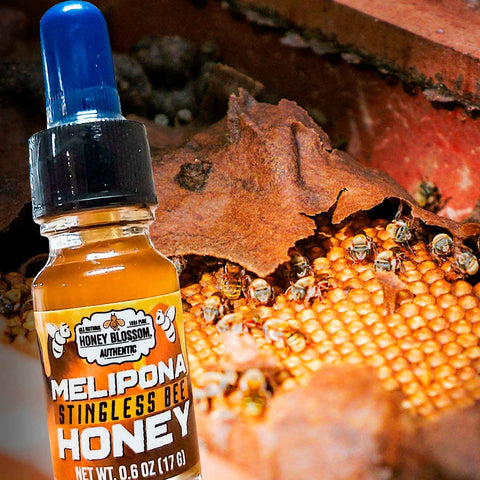 Melipona Stingless Bee Honey Blossom Honey