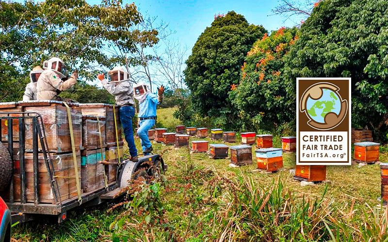Save the Bees & Help Rural Communities through our Fair Trade Honey Blossom