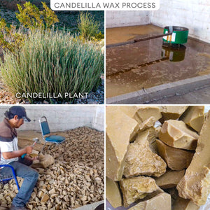 100% Candelilla Vegan Wax Candle | Large Pine | ALL Natural Air Purifier vs Allergies and Airborne Contaminants