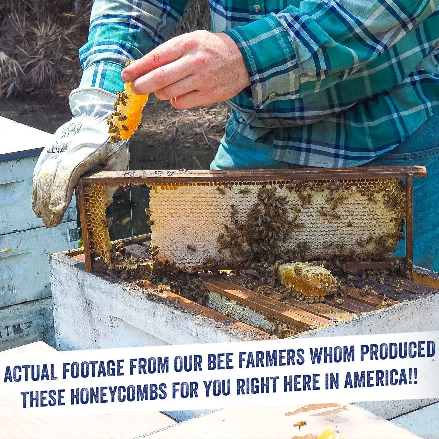 Image of the beekeeper holding with one hand a piece of honeycomb with bees on it, and with the other hand holding a frame of honeycomb full of bees, over a hive.