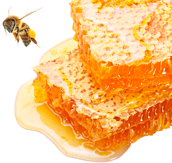 Image of 2 Honey Blossom honeycombs, dropping all their honey, and a bee flying over them.