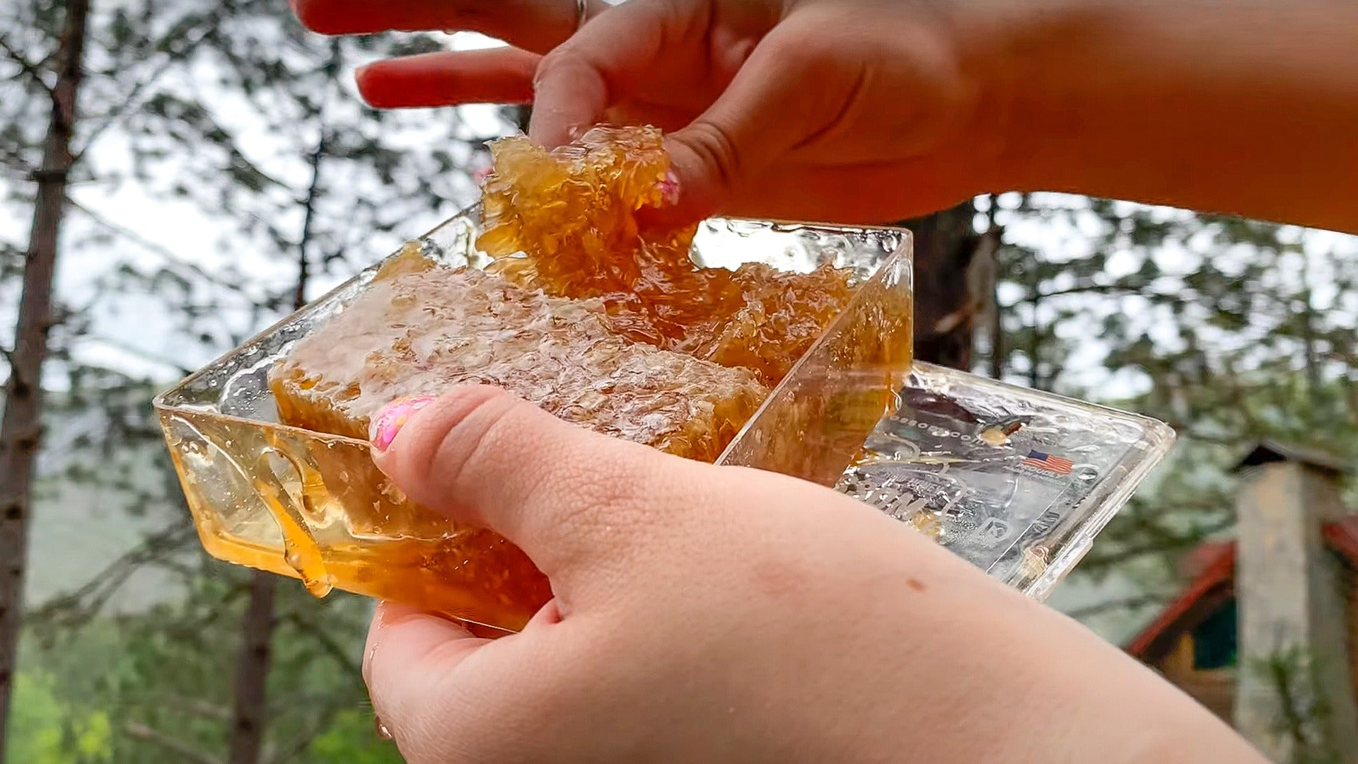 Video of the Honey Blossom comb box held with one hand, and with the other hand showing a piece of the comb, dropping its honey. With the background of a forest