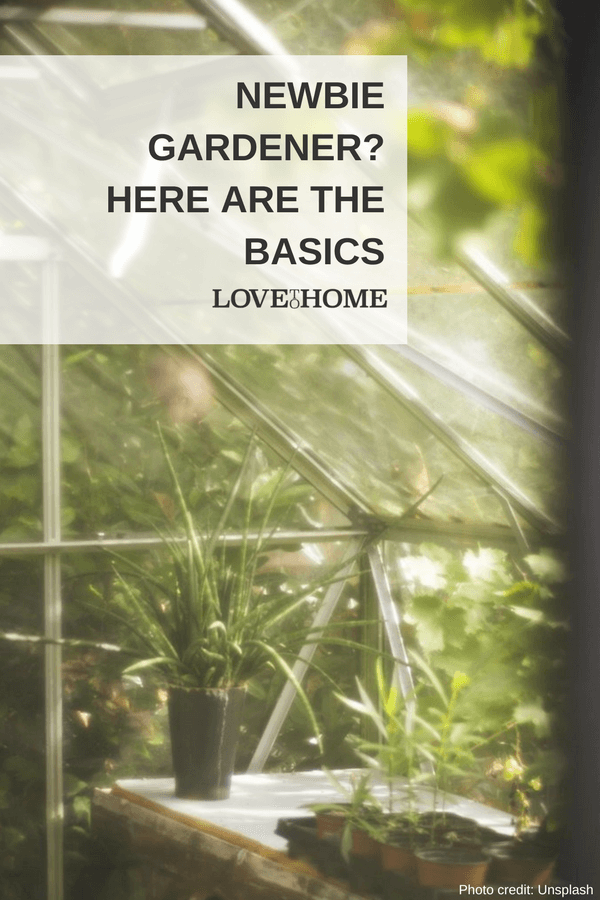 Are you a newbie gardener? Here are the basics.