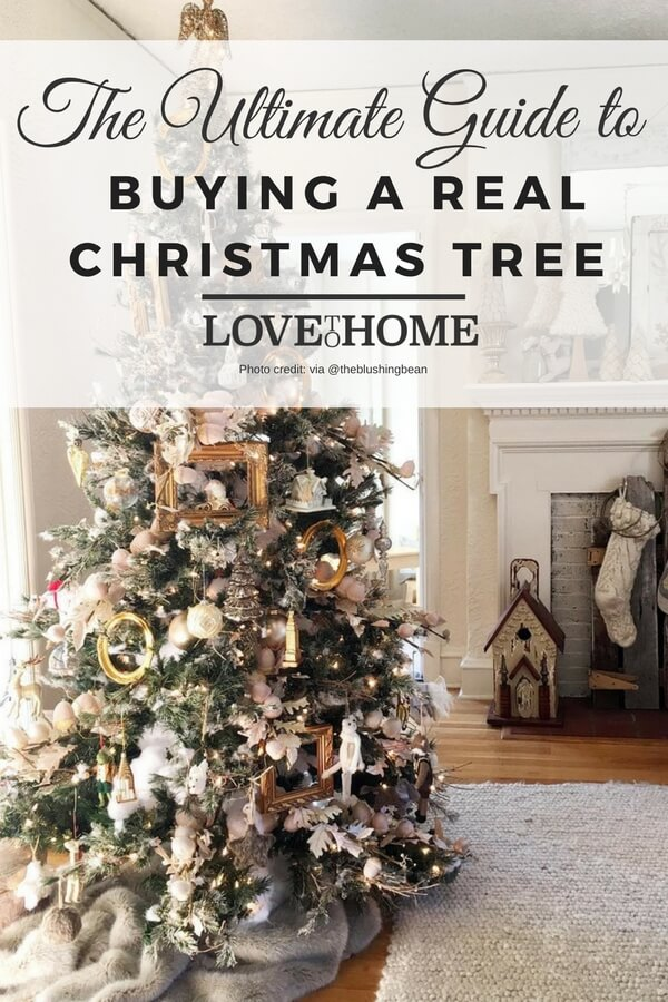 Want to buy a real christmas tree this year? Here's the ultimate guide to buying a real christmas tree on Love to Home. Photo credit: @theblushingbean via Instagram