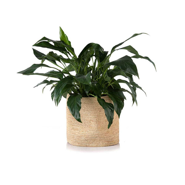Kiazo Planter Medium Natural