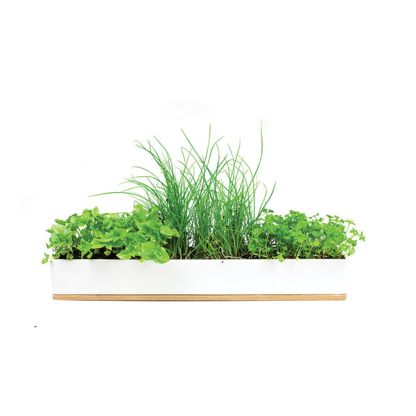 MicroHerbs Windowsill Box by Urban Greens - Available At Berry Jam Sweet Living