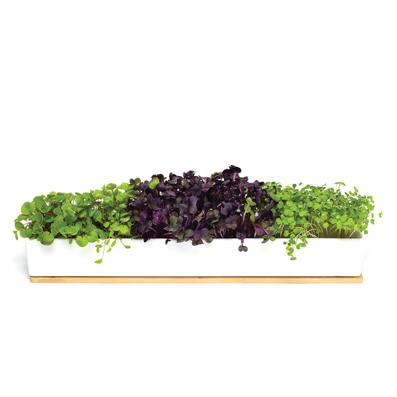 MicroGreens Windowsill Box by Urban Greens - Available At Berry Jam Sweet Living