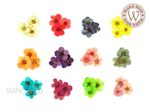 Dried Five Petal Flower Nail Art Decoration - 1 set