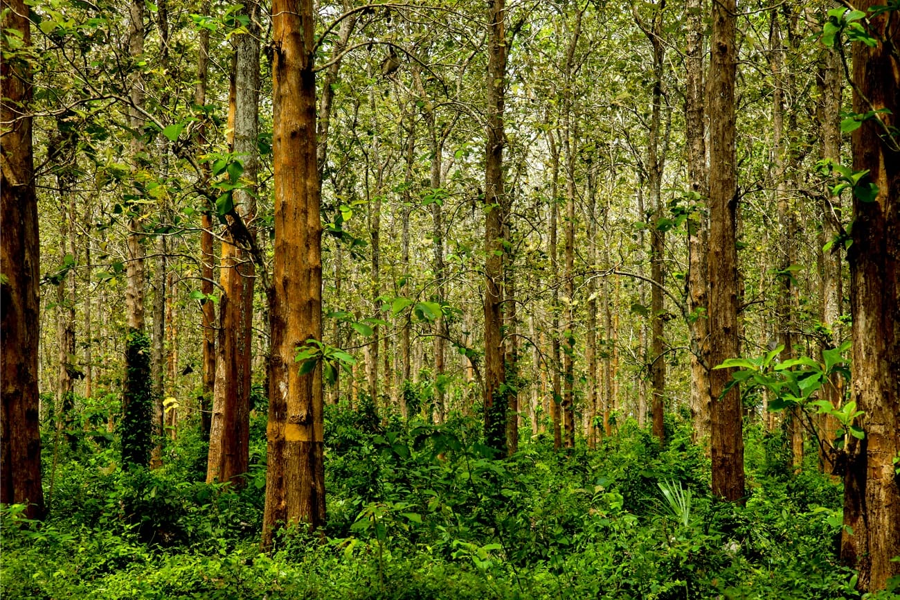 Teak forest- Why is reclaimed teak so good for furniture?