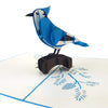 Blue Jay 3d pop up card