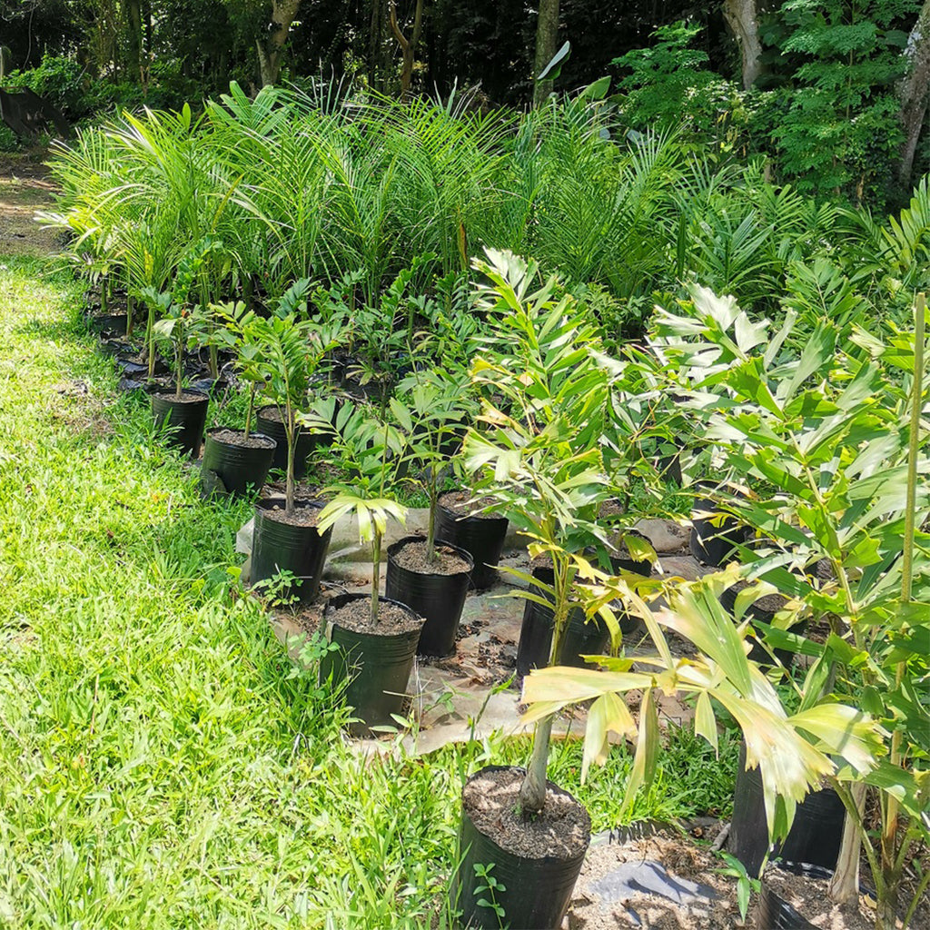 Malagos Garden Resort Plants