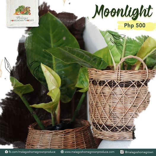 Davao online Plant Store