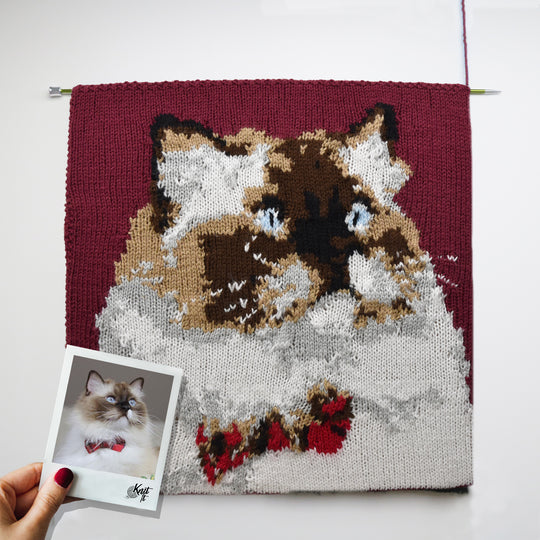 Pets Five Colour KnitPic Kit
