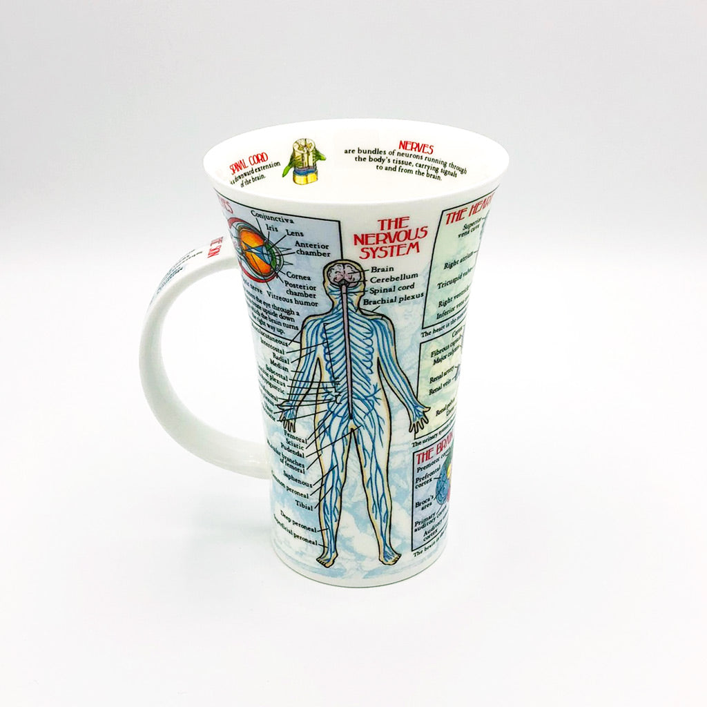 dunnoon body works circulatory system and nervous system fine bone china mug at lambertville trading company