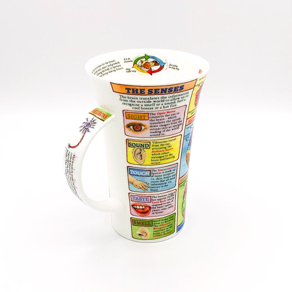 dunnoon brain fine bone china mug at lambertville trading company