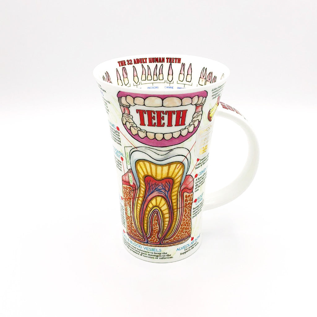 dunnoon teeth fine bone china mug at lambertville trading company